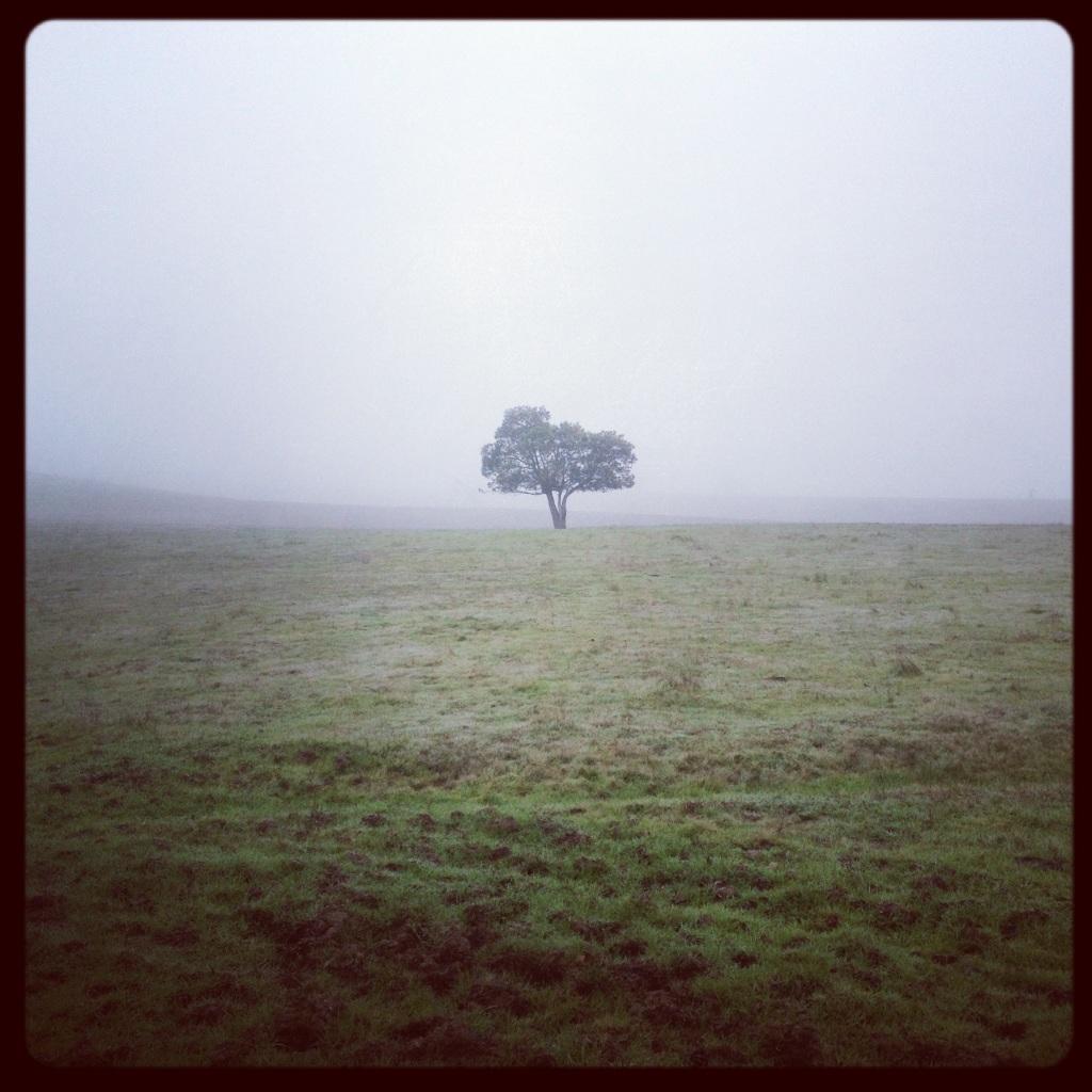 thinking tree